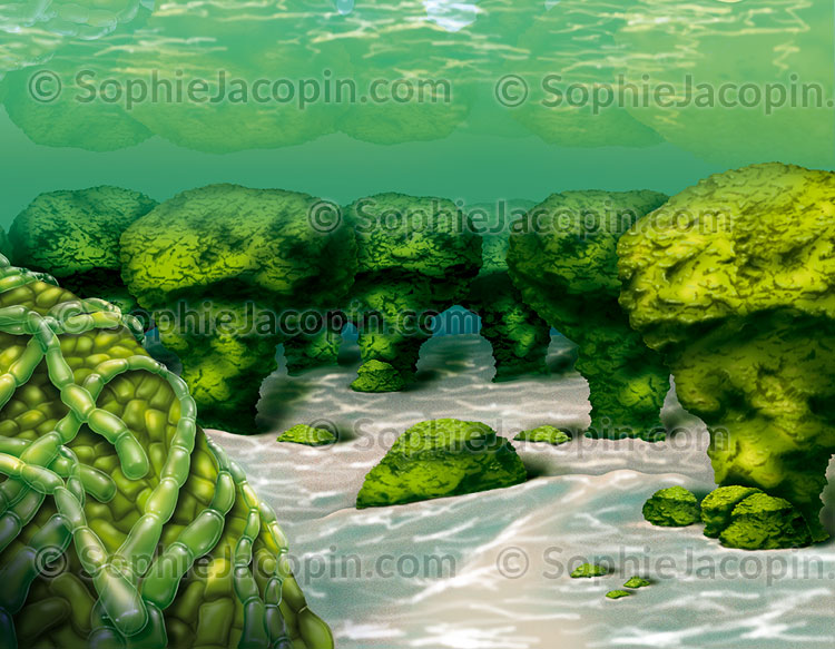 Illustration medicale_Cyanobactéries