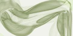 Anatomie - Membre inféreur - Entier