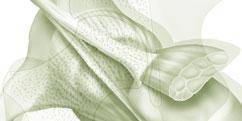 Anatomie - Membre inférieur - Hanche