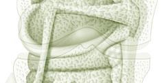 Anatomie - Système osseux - Articulation Genou