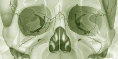 Anatomie - Système osseux - Squelette Crâne