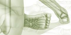 Anatomie - Système osseux - Squelette Membre inférieur