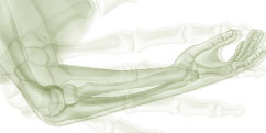 Anatomie - Système osseux - Squelette Membre supérieur