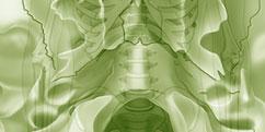 Anatomie - Système osseux