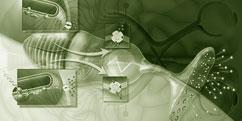 Physiologie - Système sensoriel - Vision