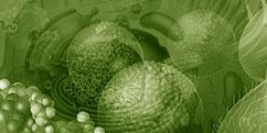 Biologie - Cellules