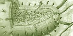 Biologie - Micro-organismes - Bactéries