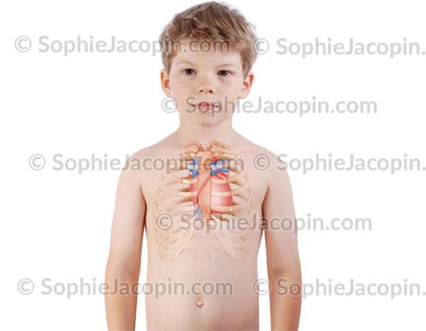 Cœur enfant 6 ans