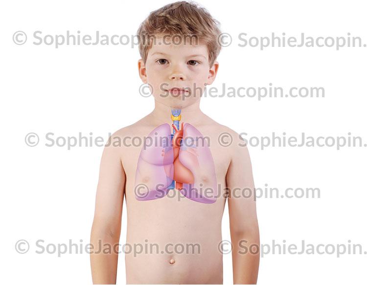 Cœur Poumons Enfant