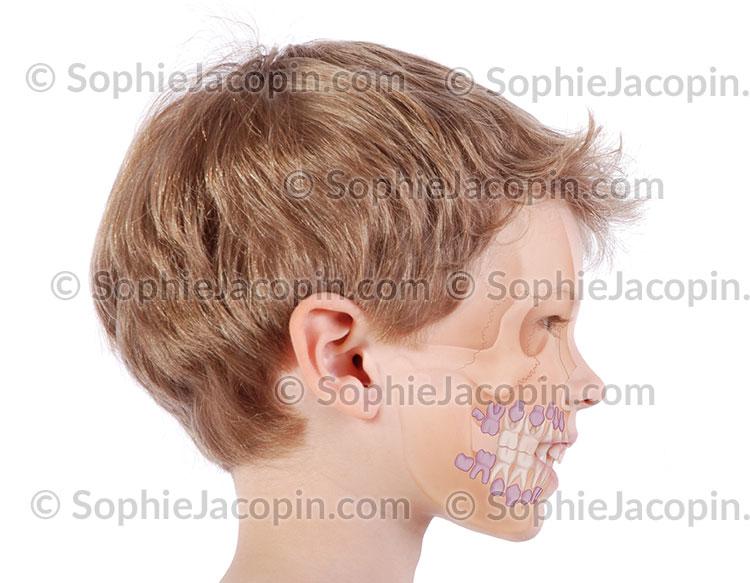 Dents enfants 6 ans
