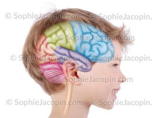 Lobes cerveau enfants