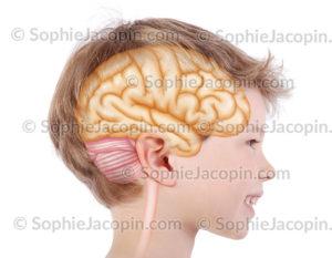 Cerveau enfant 6 ans