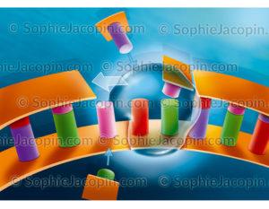 Duplication d'ADN