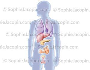 Mucoviscidose