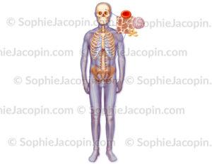 Hématopoïèse