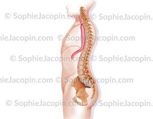 Laparotomie-thoracotomie droite