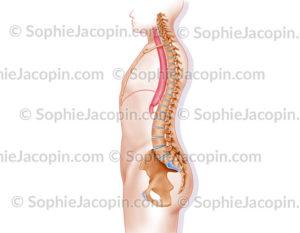 Œsophagectomie