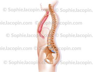 Œsophagectomie sub-totale