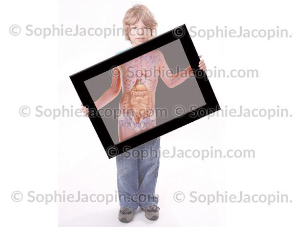 Anatomie tronc enfant