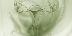 Anatomie - Appareil génital - Féminin / Général