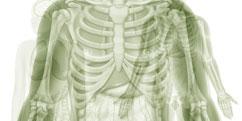 Anatomie - Générale - Organes