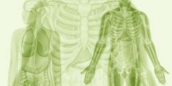 Anatomie - Générale