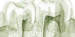 Anatomie - Système digestif - Dentaire