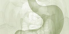 Anatomie - Système digestif - Gastrique / Œsophage
