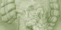 Anatomie - Système digestif - Gastrique / Intestins Côlon