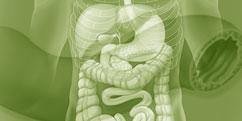 Anatomie - Système digestif