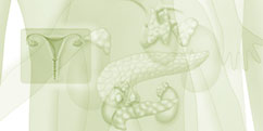 Anatomie - Système endocrinien