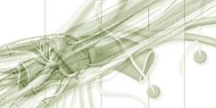 Anatomie - Système nerveux périphérique - Membre supérieur