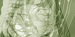 Anatomie - Système lymphatique - Détails