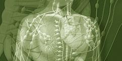 Anatomie - Système lymphatique - Entier