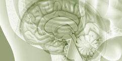 Anatomie - Système nerveux central - Méninges