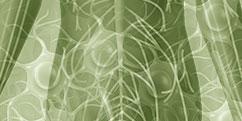 Anatomie - Système nerveux périphérique - Abdomen