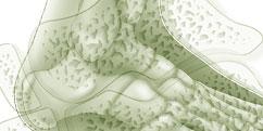 Anatomie - Système osseux - Articulation Cheville