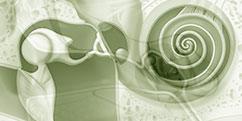 Spécialités Médicales - ORL - Oreille / Pathologies du tympan