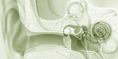 Anatomie - Système sensoriel - Ouïe / Oreille générale