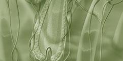Anatomie - Système sensoriel - Phanères / Cheveux Poils
