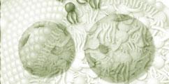 Biologie - Cellules - Adipeuses / Lipides