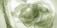 Biologie - Cellules - Souches