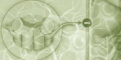 Spécialités Médicales - Neurologie - Maladie de Charcot