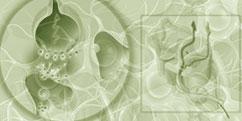 Spécialités Médicales - Neurologie - Douleur
