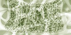 Anatomie - Système osseux - Structure osseuse