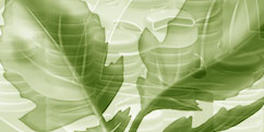 Didactique Scientifique - Botanique