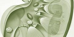 Pathologies - Urinaires - Lithiase / Calculs rénaux