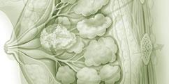 Spécialités Médicales - Cancérologie / Oncologie - Cancers Sein