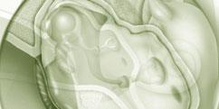 Spécialités Médicales - ORL - Oreille / Otites