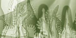 Pathologies - Réactions immunitaires - Intolérance gluten
